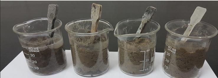 Opakowania na żywność szybko psującą się z naturalnych biodegradowalnych składników odpowiedzią na rosnące zaśmiecanie środowiska polimerowymi odpadami